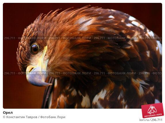 Купить «Орел», фото № 296711, снято 4 июня 2007 г. (c) Константин Тавров / Фотобанк Лори