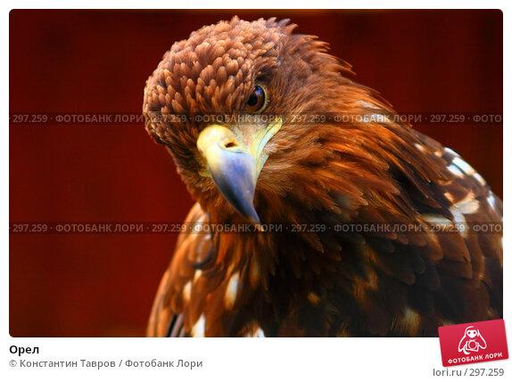 Орел, фото № 297259, снято 4 июня 2007 г. (c) Константин Тавров / Фотобанк Лори