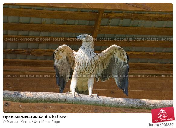 Купить «Орел-могильник Aquila heliaca», фото № 296359, снято 13 мая 2008 г. (c) Михаил Котов / Фотобанк Лори