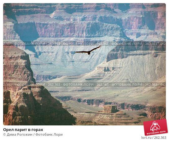Орел парит в горах, фото № 262363, снято 11 сентября 2006 г. (c) Дима Рогожин / Фотобанк Лори