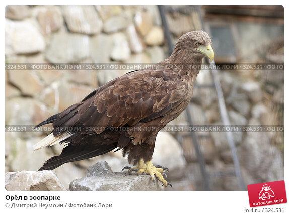 Купить «Орёл в зоопарке», эксклюзивное фото № 324531, снято 28 апреля 2008 г. (c) Дмитрий Нейман / Фотобанк Лори