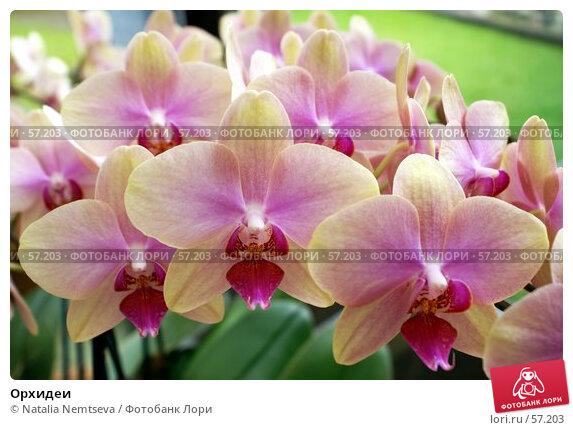 Купить «Орхидеи», эксклюзивное фото № 57203, снято 7 апреля 2007 г. (c) Natalia Nemtseva / Фотобанк Лори