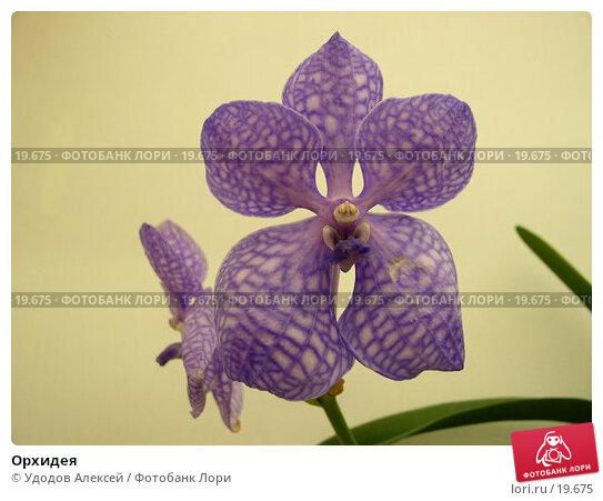 Купить «Орхидея», фото № 19675, снято 15 февраля 2007 г. (c) Удодов Алексей / Фотобанк Лори