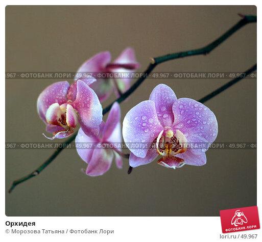 Орхидея, фото № 49967, снято 16 марта 2006 г. (c) Морозова Татьяна / Фотобанк Лори