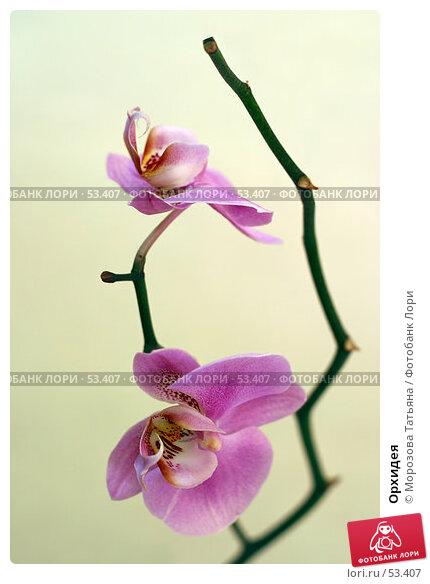 Купить «Орхидея», фото № 53407, снято 3 апреля 2006 г. (c) Морозова Татьяна / Фотобанк Лори