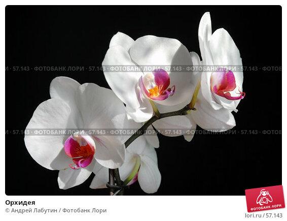 Купить «Орхидея», фото № 57143, снято 2 июля 2007 г. (c) Андрей Лабутин / Фотобанк Лори