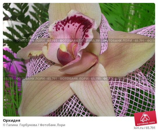 Орхидея, фото № 65791, снято 7 июня 2005 г. (c) Галина  Горбунова / Фотобанк Лори
