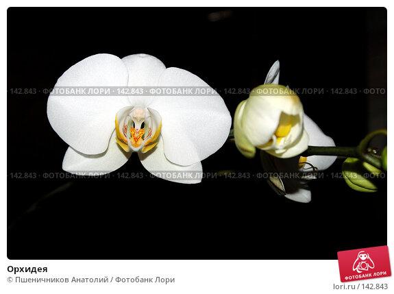 Купить «Орхидея», фото № 142843, снято 9 сентября 2006 г. (c) Пшеничников Анатолий / Фотобанк Лори