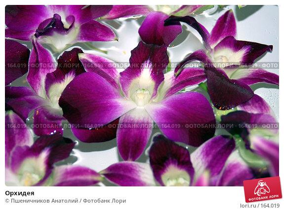 Орхидея, фото № 164019, снято 4 декабря 2007 г. (c) Пшеничников Анатолий / Фотобанк Лори