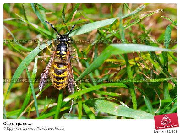 Оса в траве..., фото № 82691, снято 12 августа 2007 г. (c) Крупнов Денис / Фотобанк Лори