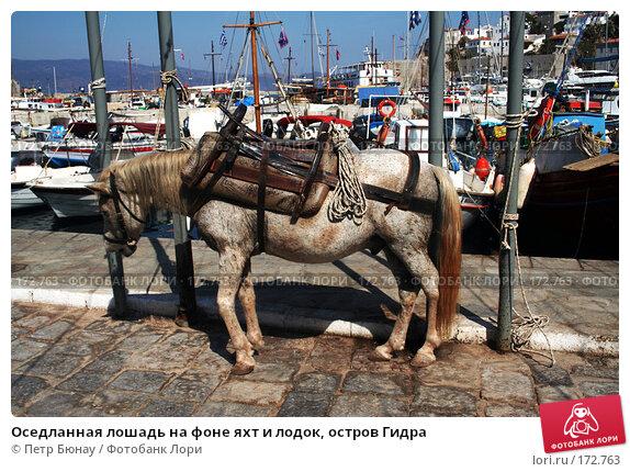 Оседланная лошадь на фоне яхт и лодок, остров Гидра, фото № 172763, снято 7 октября 2007 г. (c) Петр Бюнау / Фотобанк Лори