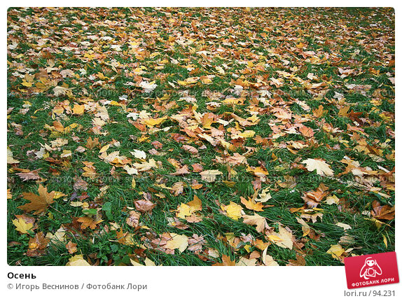 Купить «Осень», фото № 94231, снято 7 октября 2007 г. (c) Игорь Веснинов / Фотобанк Лори