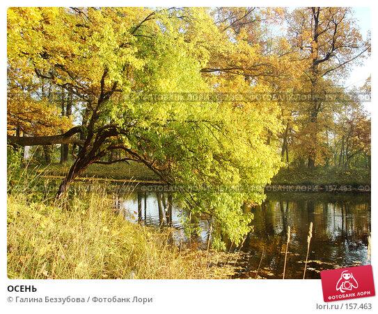 ОСЕНЬ, фото № 157463, снято 29 сентября 2007 г. (c) Галина Беззубова / Фотобанк Лори