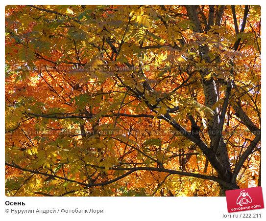 Купить «Осень», фото № 222211, снято 25 апреля 2018 г. (c) Нурулин Андрей / Фотобанк Лори
