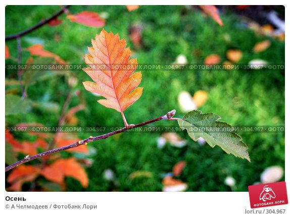Осень, фото № 304967, снято 30 октября 2007 г. (c) A Челмодеев / Фотобанк Лори