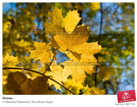 Осень, фото № 307715, снято 7 октября 2007 г. (c) Максим Пименов / Фотобанк Лори
