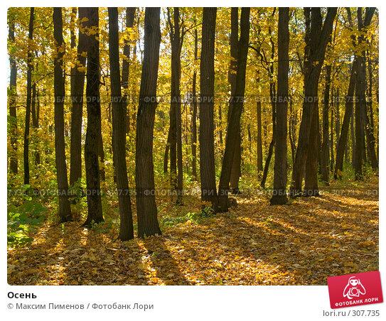Купить «Осень», фото № 307735, снято 7 октября 2007 г. (c) Максим Пименов / Фотобанк Лори