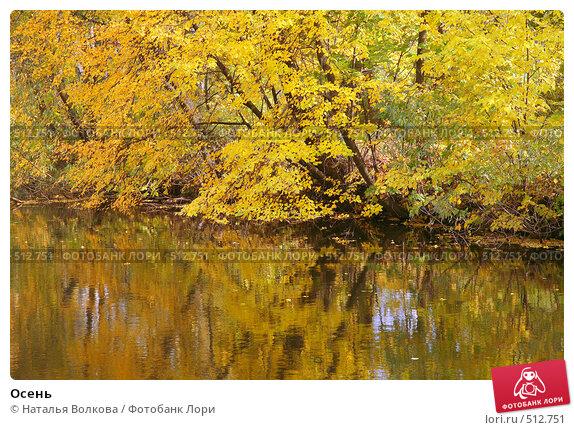 Купить «Осень», фото № 512751, снято 4 октября 2008 г. (c) Наталья Волкова / Фотобанк Лори