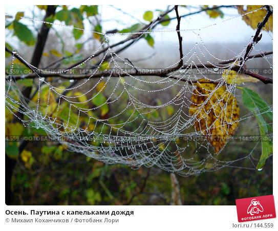 Осень. Паутина с капельками дождя, фото № 144559, снято 23 сентября 2007 г. (c) Михаил Коханчиков / Фотобанк Лори