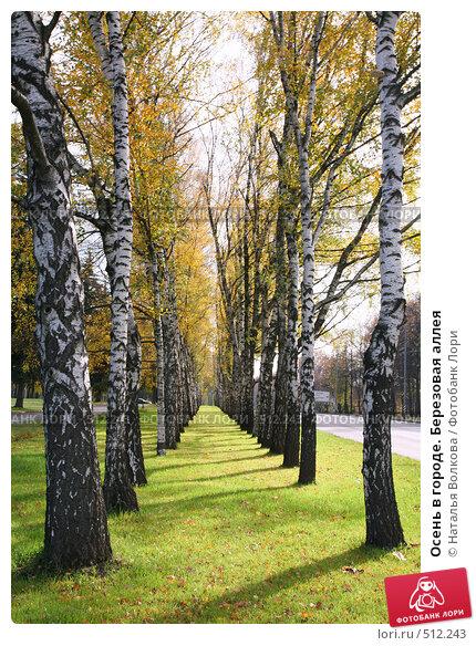 Купить «Осень в городе. Березовая аллея», фото № 512243, снято 8 января 2000 г. (c) Наталья Волкова / Фотобанк Лори