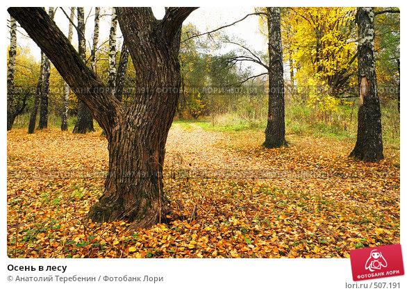 Купить «Осень в лесу», фото № 507191, снято 11 октября 2008 г. (c) Анатолий Теребенин / Фотобанк Лори