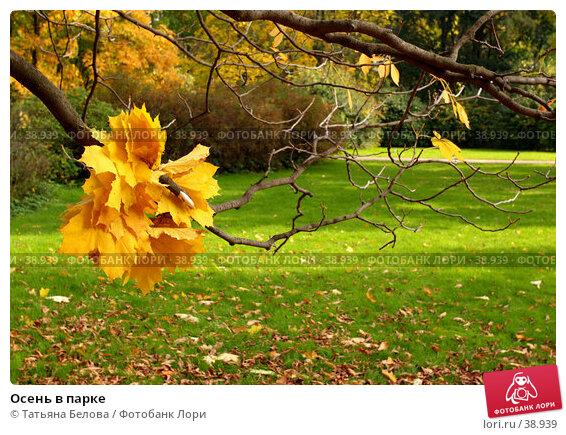 Осень в парке, фото № 38939, снято 27 июля 2017 г. (c) Татьяна Белова / Фотобанк Лори