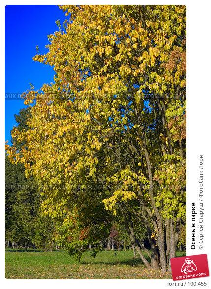Осень в парке, фото № 100455, снято 30 сентября 2007 г. (c) Сергей Старуш / Фотобанк Лори