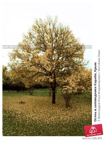 Осень в заповеднике Караби, Крым, фото № 235475, снято 27 октября 2007 г. (c) Виноградов Илья Владимирович / Фотобанк Лори