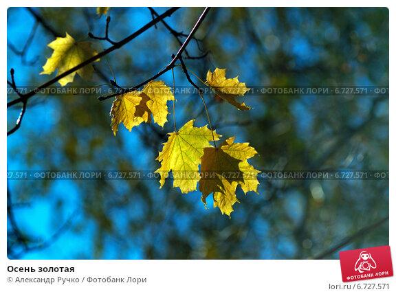 Осень золотая. Стоковое фото, фотограф Александр Ручко / Фотобанк Лори