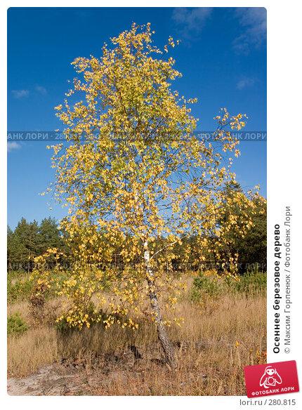 Купить «Осеннее березовое дерево», фото № 280815, снято 20 октября 2005 г. (c) Максим Горпенюк / Фотобанк Лори