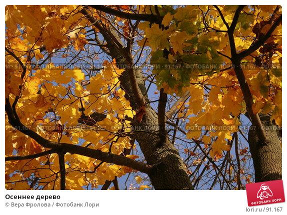 Осеннее дерево, фото № 91167, снято 30 сентября 2007 г. (c) Вера Фролова / Фотобанк Лори