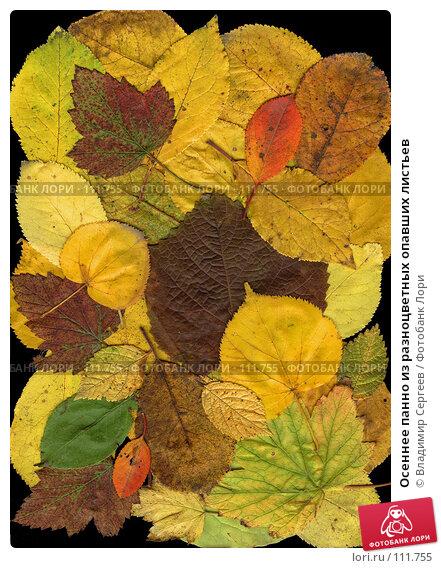 Купить «Осеннее панно из разноцветных опавших листьев», фото № 111755, снято 18 марта 2018 г. (c) Владимир Сергеев / Фотобанк Лори