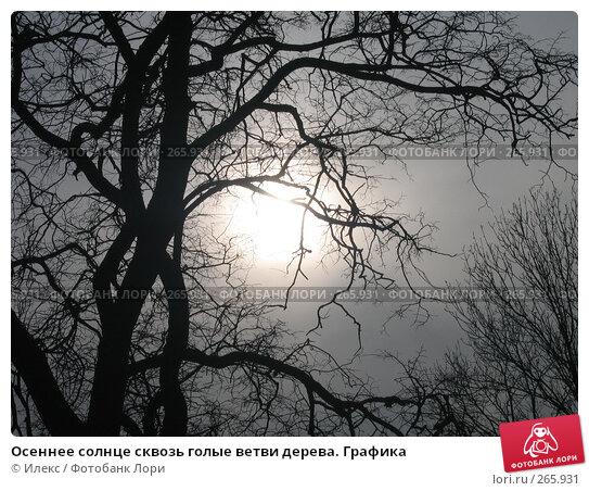 Купить «Осеннее солнце сквозь голые ветви дерева. Графика», фото № 265931, снято 23 марта 2007 г. (c) Морковкин Терентий / Фотобанк Лори