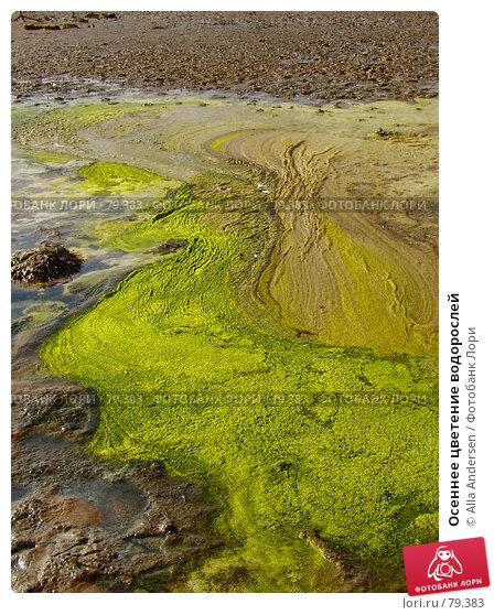 Осеннее цветение водорослей, иллюстрация № 79383 (c) Alla Andersen / Фотобанк Лори