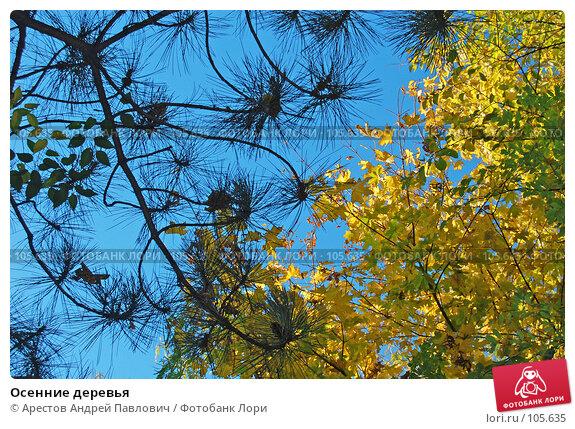 Осенние деревья, фото № 105635, снято 20 октября 2007 г. (c) Арестов Андрей Павлович / Фотобанк Лори