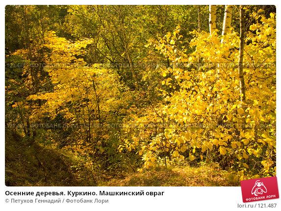 Осенние деревья. Куркино. Машкинский овраг, фото № 121487, снято 22 сентября 2007 г. (c) Петухов Геннадий / Фотобанк Лори