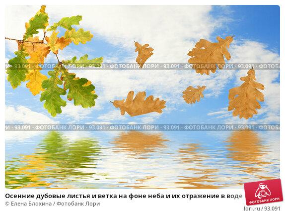 Купить «Осенние дубовые листья и ветка на фоне неба и их отражение в воде», фото № 93091, снято 22 сентября 2007 г. (c) Елена Блохина / Фотобанк Лори