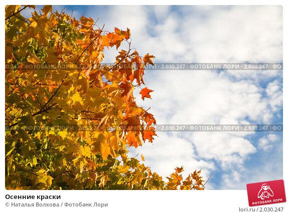 Осенние краски, фото № 2030247, снято 21 сентября 2010 г. (c) Наталья Волкова / Фотобанк Лори