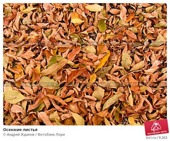 Купить «Осенние листья», фото № 9263, снято 25 апреля 2018 г. (c) Андрей Жданов / Фотобанк Лори