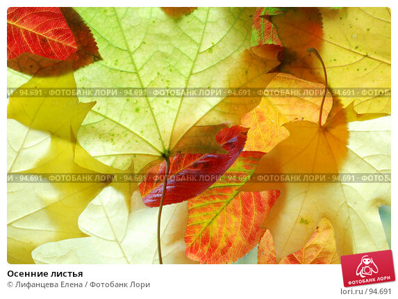 Купить «Осенние листья», фото № 94691, снято 5 октября 2007 г. (c) Лифанцева Елена / Фотобанк Лори