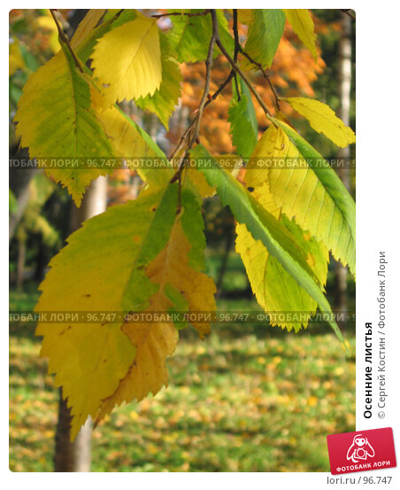 Осенние листья, фото № 96747, снято 2 октября 2005 г. (c) Сергей Костин / Фотобанк Лори