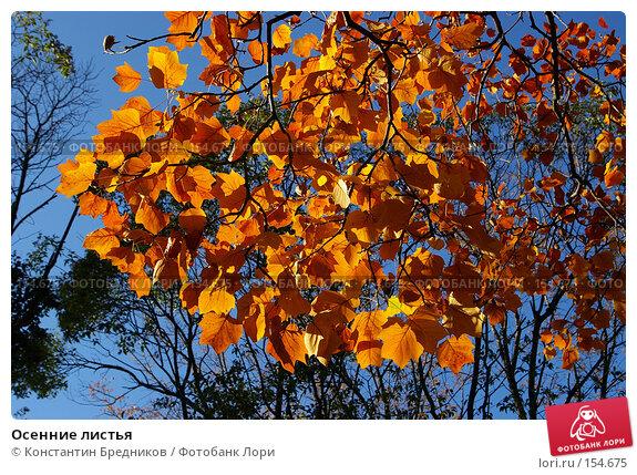 Осенние листья, фото № 154675, снято 20 сентября 2006 г. (c) Константин Бредников / Фотобанк Лори