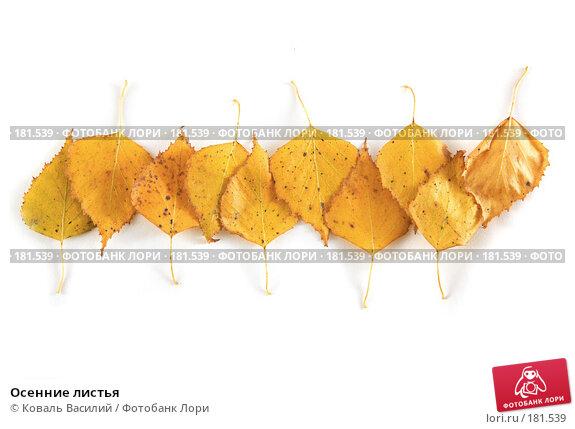 Осенние листья, фото № 181539, снято 18 октября 2006 г. (c) Коваль Василий / Фотобанк Лори