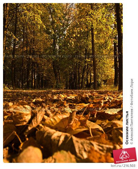 Осенние листья, фото № 216503, снято 27 сентября 2007 г. (c) Алексей Пантелеев / Фотобанк Лори