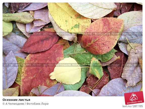 Осенние листья, фото № 287155, снято 4 октября 2007 г. (c) A Челмодеев / Фотобанк Лори