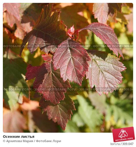 Осенние листья, фото № 309047, снято 22 сентября 2007 г. (c) Архипова Мария / Фотобанк Лори