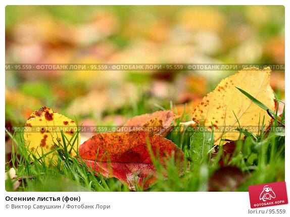 Осенние листья (фон), фото № 95559, снято 26 июля 2017 г. (c) Виктор Савушкин / Фотобанк Лори