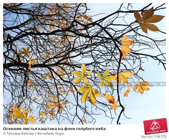 Осенние листья каштана на фоне голубого неба, эксклюзивное фото № 118775, снято 23 сентября 2017 г. (c) Татьяна Белова / Фотобанк Лори