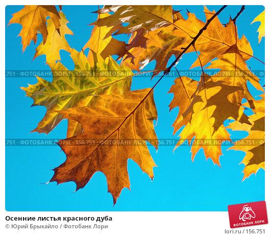 Осенние листья красного дуба, фото № 156751, снято 26 октября 2006 г. (c) Юрий Брыкайло / Фотобанк Лори