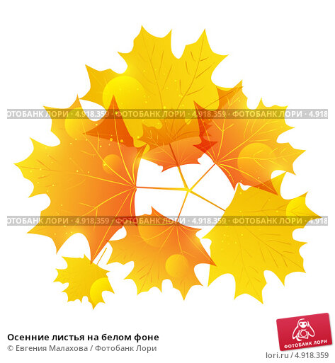 Осенние листья на белом фоне. Стоковая иллюстрация, иллюстратор Евгения Малахова / Фотобанк Лори